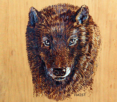 Pyrography - Coyote by Ron Haist