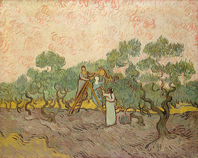 Vincent Painting - Women Picking Olives by Vincent van Gogh