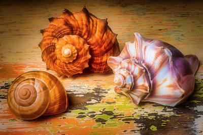 Photograph - Wonderful Shell Still Life by Garry Gay