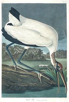 Ibis Wall Art - Painting - Wood Ibis by John James Audubon