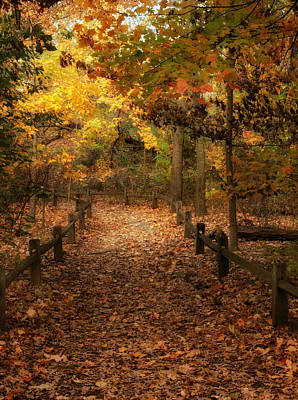 Photograph - Woodland Trail by Jessica Jenney