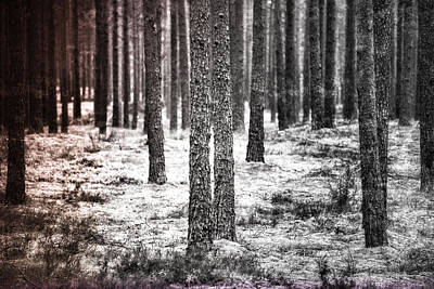 Photograph - Woods by Olivier De Rycke