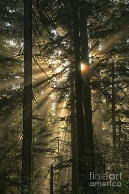 Photograph - Sol Duc Sunbeams by Adam Jewell