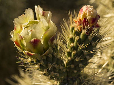 Photograph - Yellow Cactus Flower by Jean Noren