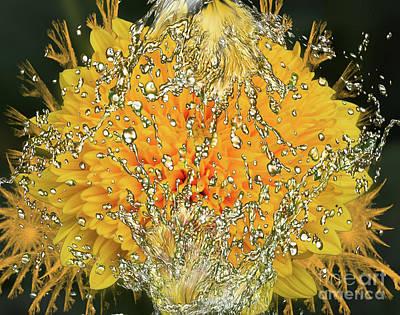 Yellow Dahlia Art Print by Elvira Ladocki