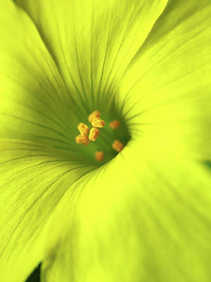 Photograph - Yellow Flower by Paulo Goncalves