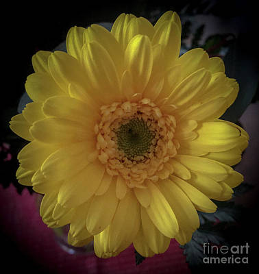 Photograph - Yellow by Joseph Yarbrough