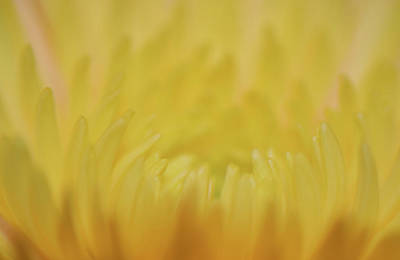 Food And Flowers Still Life - Yellow Mum Petals by Larah McElroy