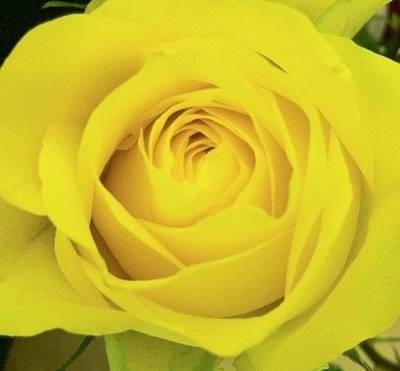 Photograph - Yellow Rose by Alohi Fujimoto