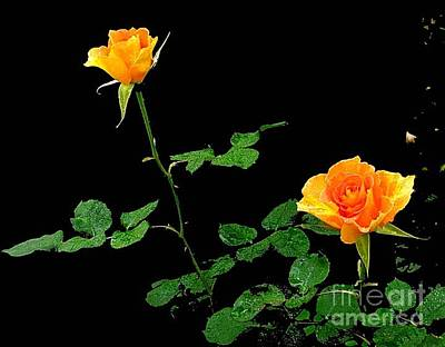 Photograph - 2 Yellow Roses by Daniel Koral