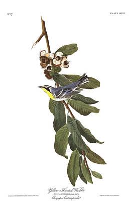 Warbler Wall Art - Painting - Yellow Throated Warbler by John James Audubon