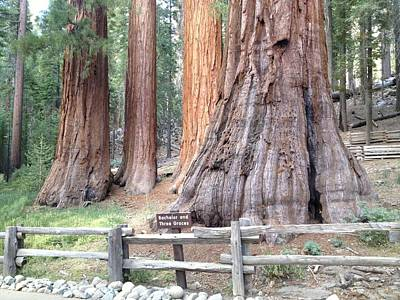 Photograph - Yosemite Giant Sequoia Groves by Richard Yates