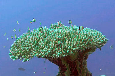 Zanzibar Island Sea  Coral Reef Vegitation Bio Diversity Of Exotic Fish Plants And  Organisims Zanzi Art Print