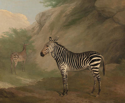 Painting - Zebra by Jacques-Laurent Agasse