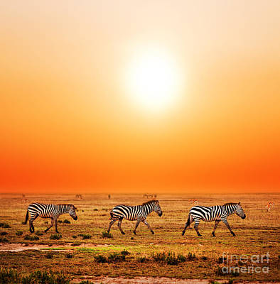 Wildlife Photograph - Zebras Herd On African Savanna At Sunset. by Michal Bednarek