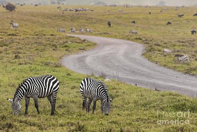 Fireworks - Zebras in Ngorongoro conservation area, Tanzania by Mariusz Prusaczyk