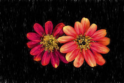 Photograph - Zinnia With Sketch Effect by Kay Brewer
