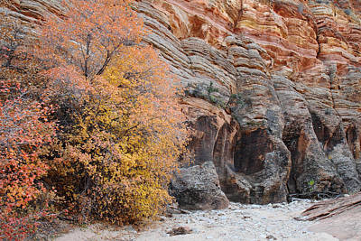 State Word Art - Zion Autumn foliage by Pierre Leclerc Photography
