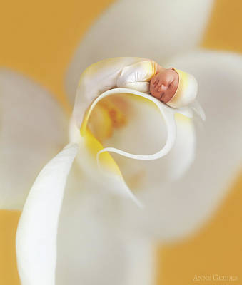 Yellow Photograph - Nate On A Moth Orchid  by Anne Geddes