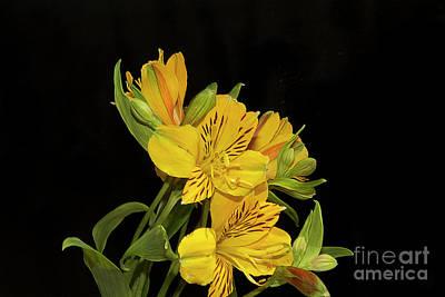 Photograph - Yellow Flowers by Elvira Ladocki