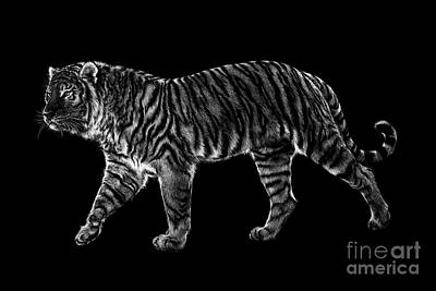 Wall Art - Drawing - Tigers Gait by Laurie Musser