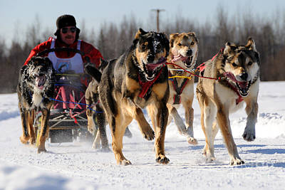 2011 Limited North American Sled Dog Race Art Print by Gary Whitton