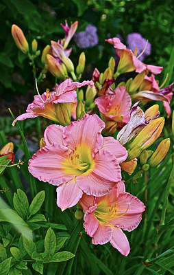 Photograph - 2015 Summer At The Garden Daylilies 1 by Janis Nussbaum Senungetuk