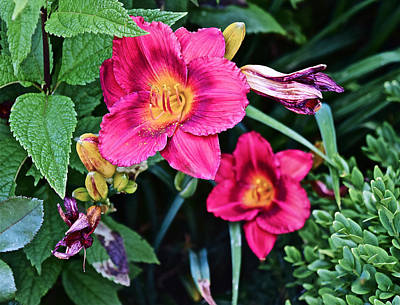 Photograph - 2015 Summer At The Garden Strawberry Candy Daylily 2 by Janis Nussbaum Senungetuk