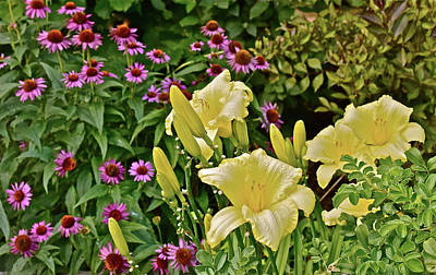 Photograph - 2016 August In The Garden Lilies And Coneflowers 1 by Janis Nussbaum Senungetuk