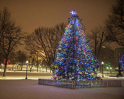 Photograph - 2016 Boston Common Christmas Tree Boston Ma Snowstorm by Toby McGuire