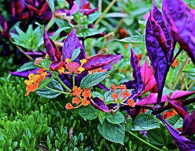 Photograph - 2016 Herb Garden Visit by Janis Nussbaum Senungetuk