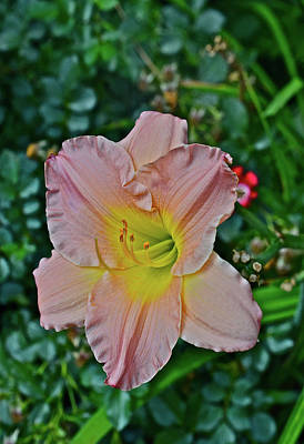 Photograph - 2016 July At The Garden Daylily Portrait by Janis Nussbaum Senungetuk
