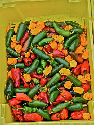 Photograph - 2016 Monona Farmers' Market Poblano Peppers by Janis Nussbaum Senungetuk