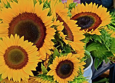 Photograph - 2016 Monona Farmer's Market Sunflowers 2 by Janis Nussbaum Senungetuk