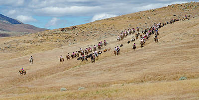 Photograph - 2016 Reno Cattle Drive 12 by Rick Mosher
