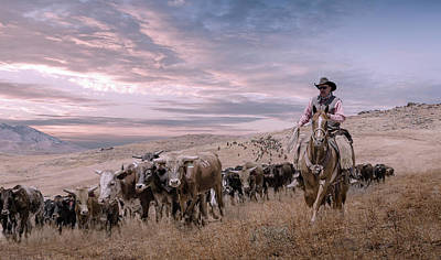 2016 Reno Cattle Drive Art Print