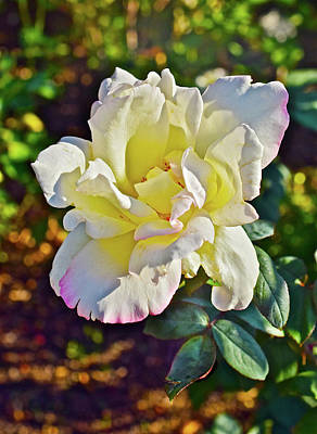 Photograph - 2016 September Rose Garden 1 by Janis Nussbaum Senungetuk