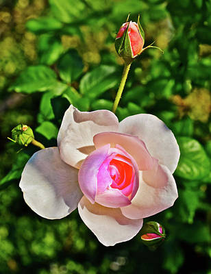 Photograph - 2016 September Rose Garden 2 by Janis Nussbaum Senungetuk