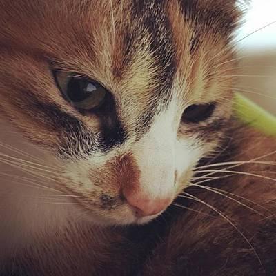 Photograph - くぅちゃん2017 #cats #ねこ by Masamichi Takano