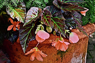 Photograph - 2017 Early July At The Gardens Begonias by Janis Nussbaum Senungetuk