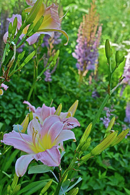 Photograph - 2017 Early July At The Gardens Sunken Garden Daylilies 2 by Janis Nussbaum Senungetuk