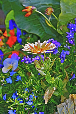 Photograph - 2017 End Of May At The Gardens A Flickr Of Sunshine by Janis Nussbaum Senungetuk