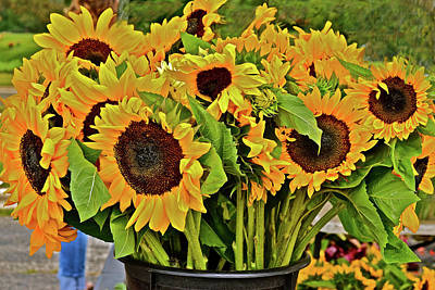 Photograph - 2017 Monona Farmers' Market August Sunflowers by Janis Nussbaum Senungetuk