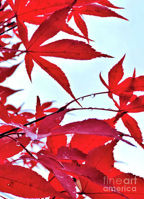 Photograph - 2017 Red Maple 2 by Victor K