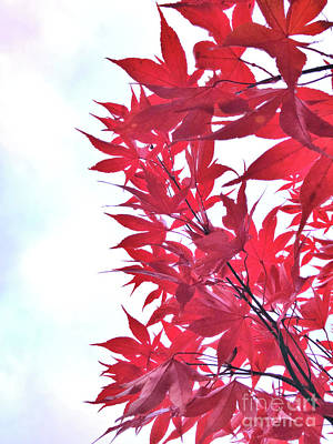 Photograph - 2017 Red Maple 3 by Victor K
