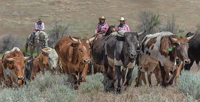 Photograph - 2018 Reno Cattle Drive 4 by Rick Mosher