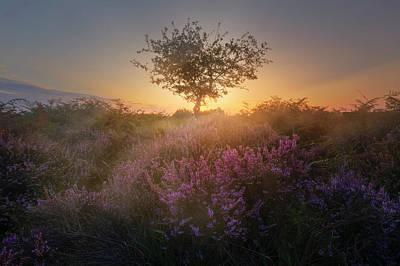 Baum Photograph - New Forest - England by Joana Kruse
