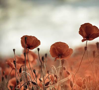 Poppy Meadow Art Print by Nailia Schwarz