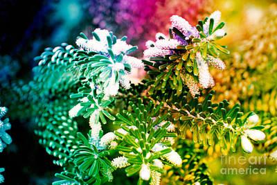 Spring Original by Lali Kacharava