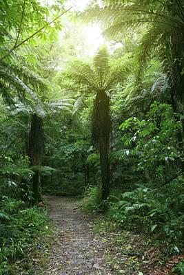 Rain Forest Digital Art - Walking Trail by Les Cunliffe